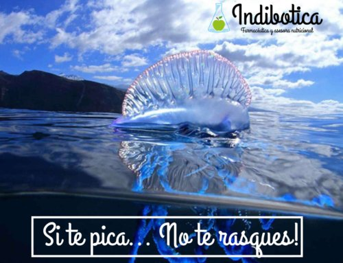 ¿Carabela portuguesa o medusa? Consejo: si te pica, no te rasques!